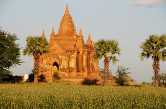 IP MYANMAR Bagan in field