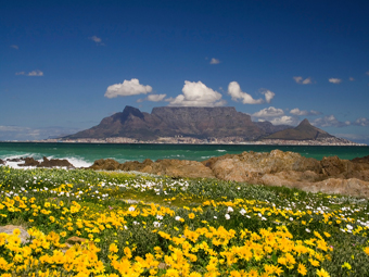 Table Mountain and flowers copy 2