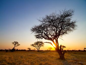 Zimbabwe Landscape & Acacias